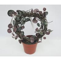 13CM(D) X 23CM(H) ROSARY VINE IN ROUND SHAPE ON BROWN PLASTIC POT.
