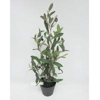 19 POTTED OLIVE TREE W/104 LVS 5 BERRY